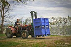 Ata Rangi #nzwine picking 2015 vintage. Tractor! More Fun, Tractors, Trucks, Vehicles, Vintage, Truck, Car, Vintage Comics, Vehicle
