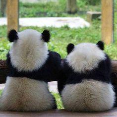 Panda Vibes (@panda_vibes) в Instagram: «Friendship goals »