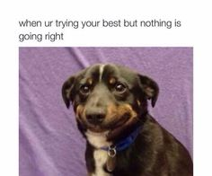 22+ Funny Animal Pictures Of Today's - #funnymemes #funnypictures #humor #funnytexts #funnyquotes #funnyanimals #funny #lol #haha #memes #entertainment #hilarious #meme