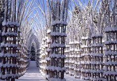 Tree Cathedral -  Giuliano Mauri