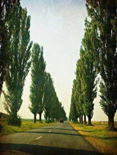 <3 Vojvodina, Serbia
