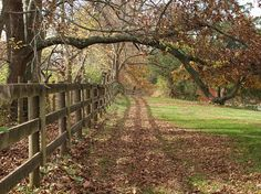 """Would like to walk along this fence and """"Look at the Trees"""""""