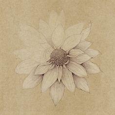 Botanical Art by Diana Ziv, via Behance
