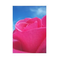 >>>Are you looking for          Pink Rose Gallery Wrapped Canvas           Pink Rose Gallery Wrapped Canvas you will get best price offer lowest prices or diccount couponeThis Deals          Pink Rose Gallery Wrapped Canvas today easy to Shops & Purchase Online - transferred directly secure...Cleck link More >>> http://www.zazzle.com/pink_rose_gallery_wrapped_canvas-192057974127459964?rf=238627982471231924&zbar=1&tc=terrest