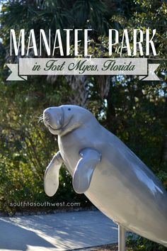 I Finally Saw Some Manatees at Manatee Park in Fort Myers Florida! from SouthtoSouthwest.com