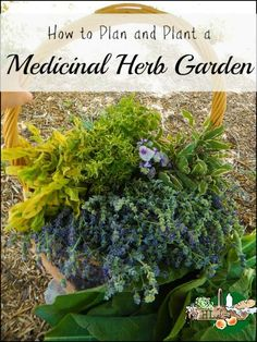 How to Plan and Plant a Medicinal Herb Garden l DIY Health l Homestead Lady (.com) How-to