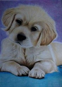 Tekening van een puppy | Be Creative