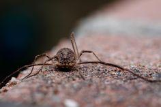 #macro #spider