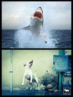 """I love my little """"shark faces""""!"""