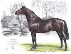 Trakehner stallion Pythagoras – Horse drawing by Katja Eichhorn