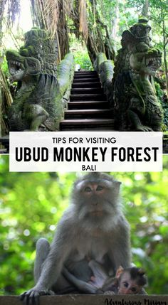 The scary monkey forest in Ubud is notorious for it's spoiled monkeys. But is almost an essential rite of passage for travelers in Bali. Here are the top tips for visiting Ubud Monkey Forest, Bali.