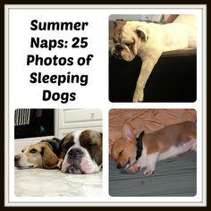 Summer Naps: 25 Photos of Sleeping Dogs