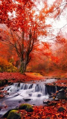 Waterfall in the Fall Fall Pictures, Nature Pictures, Beautiful Places, Beautiful Pictures, Autumn Scenes, Autumn Forest, Autumn Fall, Forest Landscape, Fantasy Landscape