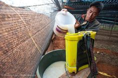 A farmer from the Miao minority pours a cocktail of pesticides into a sprayer to prepare for spraying his pseudo-ginseng farm.