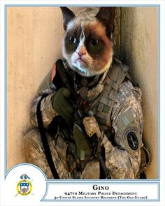 Military working cat program underway at 'The Old Guard'   Article   The United States Army