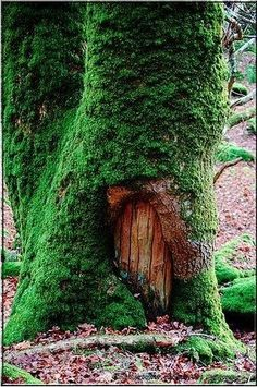 "Fairy door. I love the moss. Could be achieved with that recipe for spray on moss mixture as in the ""moss grafitti"" links I've seen."
