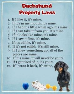 Magnet / Dachshund Property Laws / eBay / Dog Magnets are 4.5  x  3.5  inches & can be customized with name.