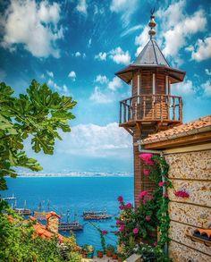 Alanya Turkey, Bougainvillea, Wedding Album, Antalya, Nature Photos, The Locals, Pink Flowers, Istanbul, Wordpress