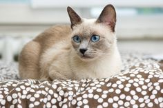 Audiogenic reflex seizures in cats' - some cats Common High Pitched Sounds Can Trigger Seizures In Some Cats