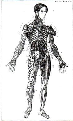 Hand-Atlas der Anatomie des Menschen  nebst einem tabellarischen Handbuche der Anatomie.(first printed in 1841)