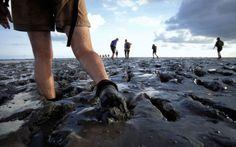 "Netherlands, Wadlopen, ""mud-walking"""