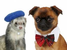 Dogs in Bowties! Ferrets in Berets! 20 Cute (& Crazy) Outfits to Buy for Your Pet - iVillage #animals dog clothes and cat clothes