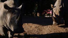 Cuáles son los animales del ex zoológico que aún siguen en el Ecoparque  Foto: LA NACION / Silvana Colombo