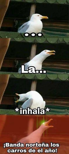 Todos hemos sido el meme de la ave gritona al menos una vez en la vida.