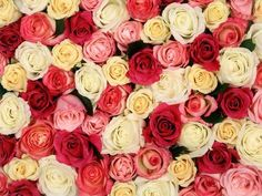 Image via We Heart It https://weheartit.com/entry/148029837/via/25191285 #beautiful #colors #cute #flowers #nature #photography #pink #red #roses #sweet #tumblr #wallpaper #white