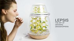 Cría tus propios insectos... para comer! // A Decorative Terrarium To Grow Your Own Edible Bugs - DesignTAXI.com