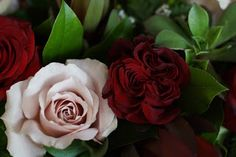 Bloom & Vine Quicksand and Hearts roses