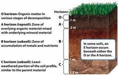 1000 images about earth systems on pinterest the earth for Soil forming factors