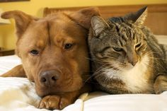 Purina - Living with Dogs and Cats