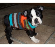 AKC  CKC Boston Terrier Puppies are ready to go is a Boston Terrier For Sale in Charles City IA