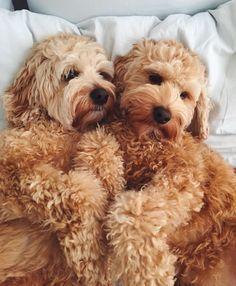 My love pets