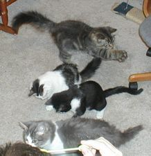 ~Tails from the Foster Kittens~: December 2002