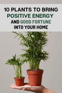 10 Plants To Bring Positive Energy And Good Fortune Into Your Home ! The post 10 Plants To Bring Positive Energy And Good Fortune Into Your Home ! appeared first on Trending Ideas. Inside Plants, Big Plants, Exotic Plants, Cool Plants, Jade Plants, Growing Flowers, Planting Flowers, Flower Plants, Indoor Flowers