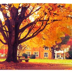 Mars Hill College in the fall!:)
