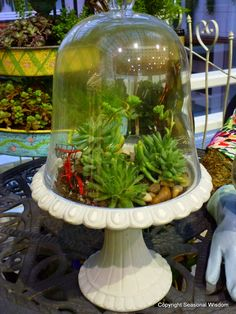 Domed terrarium with succulents at 2012 #nwfgs - Tovah Martin will be doing a seminar on terrariums at the 2013 show.