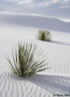 White Sands National Monument, New Mexico...oh this is one fun place to go and walk on the gypsom sand....squeeky and you can see it forever . its a vast area ...go see people... repinned www,.facebook.com/loveswish