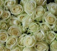 White roses  #white #wedding #flowers #roses