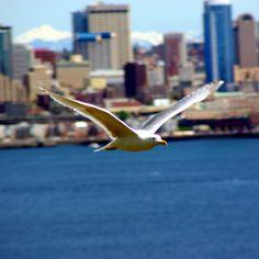 Bird. Seattle.