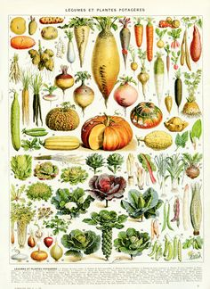 Printable vegetable poster Large format 1936 Vintage kitchen decor Vegetable poster Antique botanical print Vegetable art Botanical art etsy $3