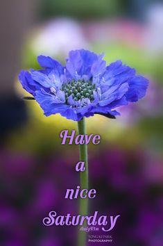 Good Morning...Happy Saturday