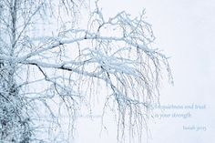 Winter Snowy Branches Snow on Tree Holiday by KnowGodThroughArt, $30.00