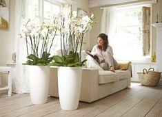 Planten als roomdivider in de kamer. Planten geven niet alleen sfeer in huis, ze kunnen ook heel praktisch zijn. deze witte orchideeën zijn bijvoorbeeld in grote witte plantenpotten van Elho geplaatst en vormen zo een natuurlijke roomdivider in de kamer. Elho