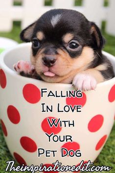 Falling In Love with Dogs is easy to do. Here is my story.