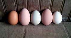 egg colors by breed