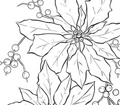 Mexican Poinsettia Coloring Page