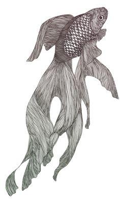 Goldfish done in biro pen Fish Drawings, Animal Drawings, Art Drawings, Drawing Animals, Koi Art, Fish Art, Koi Kunst, Veiltail Goldfish, Drawn Fish